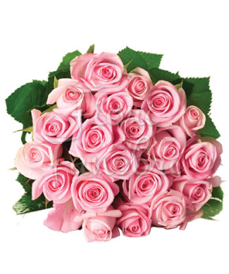 20-rose-rosa