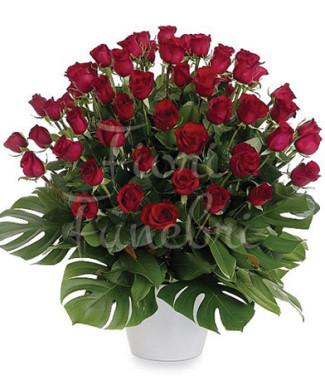 50-rose-rosse