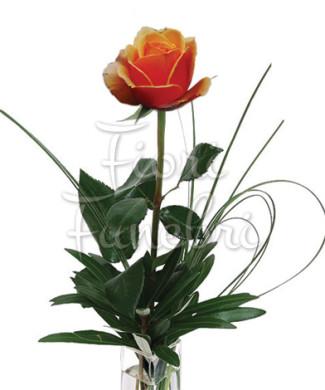 rose-arancio-numero-preciso