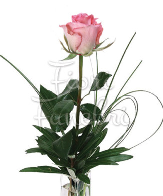 rose-rosa-numero-preciso